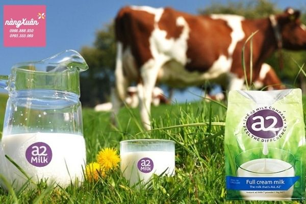 Sữa A2 giàu chất dinh dưỡng