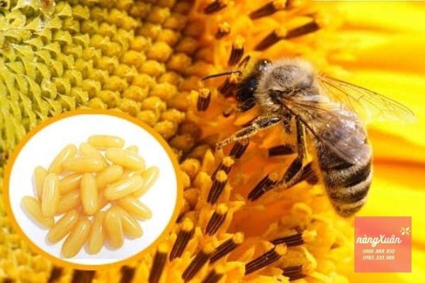 Sữa ong chúa Royal Jelly 1000mg của Úc