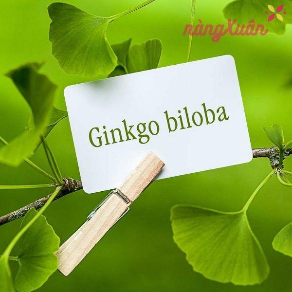 Bạch quả - Ginkgo Biloba là gì ?