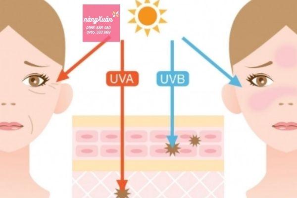 UVA / UVB là gì ?